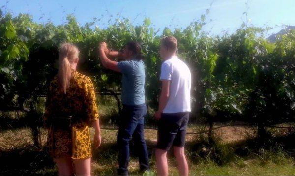 vigneto podere visitare escursione vigneti degustazione ebike vini formaggi salumi piadina podere Valentini vitigni enogastronomico territorio scoprire