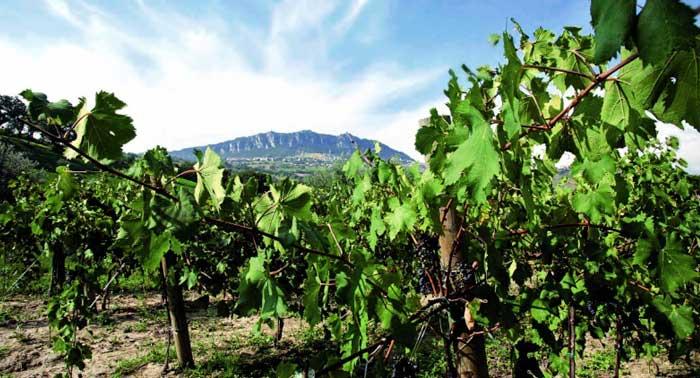 Passeggiata con Degustazione di vini